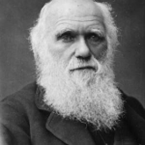 darwin-150×150